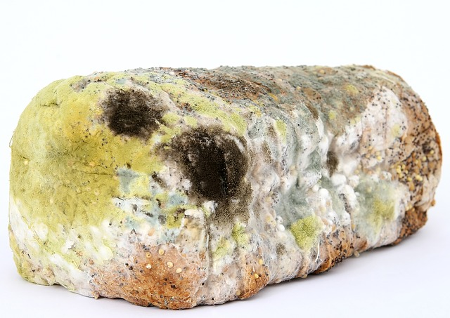 Mold on a wall - Do Air Purifiers Get Rid of Mold