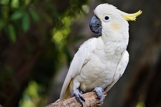 Cockatoo - Best Air Purifier for Bird Dander